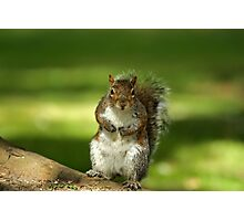 Squirrel t-shirt Photographic Print