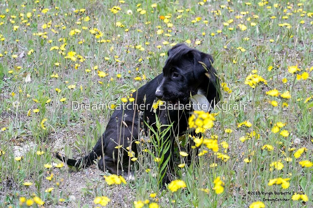 Puppy in field by DreamCatcher/ Kyrah