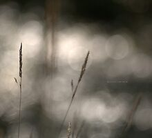 """"""" Grass Patterns In The Sunlight """" by Richard Couchman"""