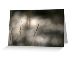 """ Grass Patterns In The Sunlight "" Greeting Card"