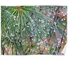 Raindrops on Pine Needles macro photography Poster