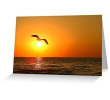 Lake Michigan Seagull sunset Greeting Card