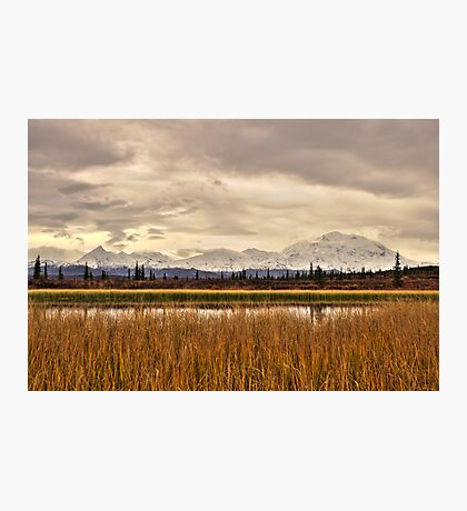 Denali Above the Reeds Photographic Print