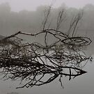 Branches in the Midst by Lozzar Landscape
