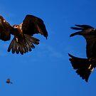Birds of Prey by Alihogg