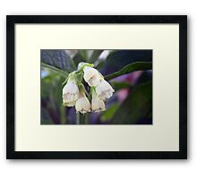 Nature's chimes Framed Print