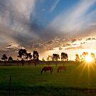 Evening light ~ Stockinbingal NSW by Rosalie Dale