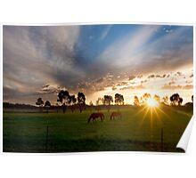 Evening light ~ Stockinbingal NSW Poster