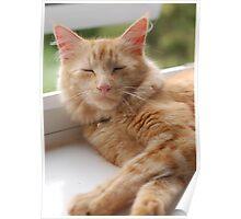 Cat print Poster