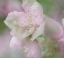 All pink & girly by Linda Lees