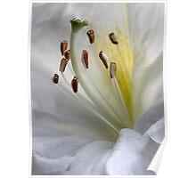 Flower pistil and stamens Poster