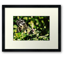 Nature Up Close Framed Print