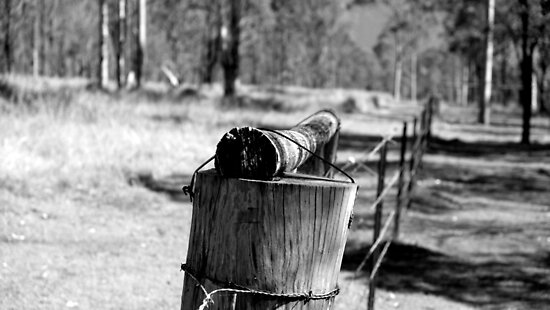 The old fence line in the back paddock by Mark Batten-O'Donohoe