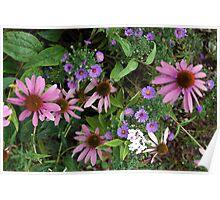 Lovely Garden Poster