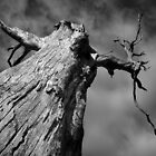 Scary Tree- Western Branch Road by Ben Loveday