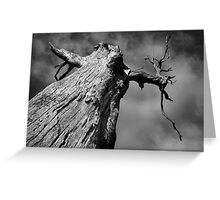 Scary Tree- Western Branch Road Greeting Card