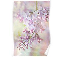 Pastel Lilacs Poster