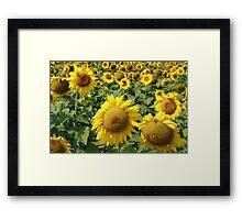 Sunflower Field on the Prairies Framed Print
