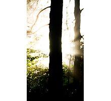 Halo Tree Photographic Print
