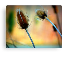 Thorny Weed nature photography macro Canvas Print