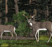 Two Deer in the woods. by Walter Colvin