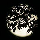Magical Moon  by debraroffo