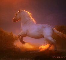 Dance of the wild Stallion  by Jeanne  Nations