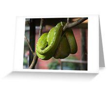 Green Tree Python or Morelia viridis Greeting Card