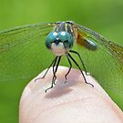Blue Dasher (iPad Case) by William Brennan
