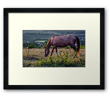 Out to Grass Framed Print