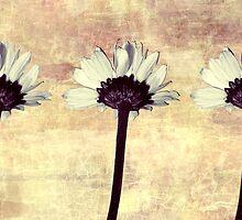 Three Little Daisies by Shawna Rowe