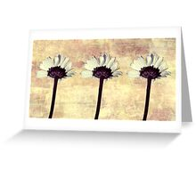 Three Little Daisies Greeting Card