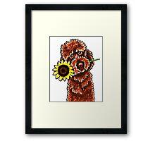 Sunny Chocolate Labradoodle Framed Print