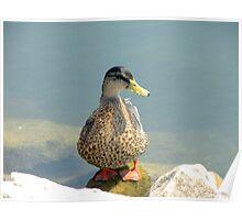 duck 110 Poster