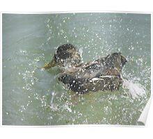 duck 116 Poster