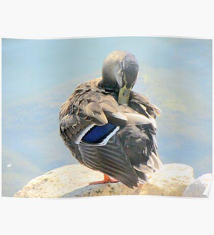 duck 122 Poster