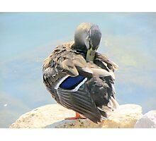 duck 122 Photographic Print