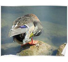 duck 138 Poster