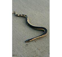 Sea Snake on a Beach Photographic Print