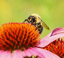 Bumble Bee by Winnie39