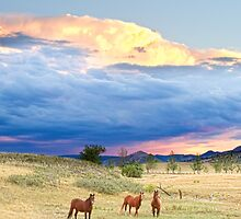 Horses On The Storm 2 by Bo Insogna