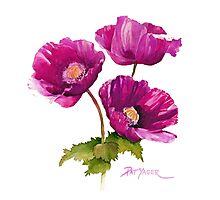 Purple Poppies Photographic Print
