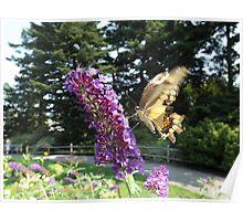 Butterfly and Flower Close-Up,  New York Botanical Garden, Bronx, New York Poster