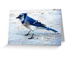 Blue Jay on The Beach Greeting Card