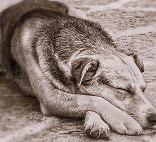 Dog Dreams by jules572