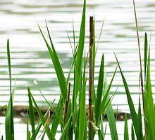 Wetland Grass by Shawna Rowe