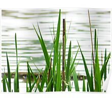 Wetland Grass Poster