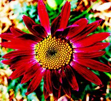 Painted Red Daisy by SRowe Art