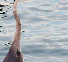 Grey Heron By The Bay by SRowe Art