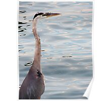 Grey Heron By The Bay Poster